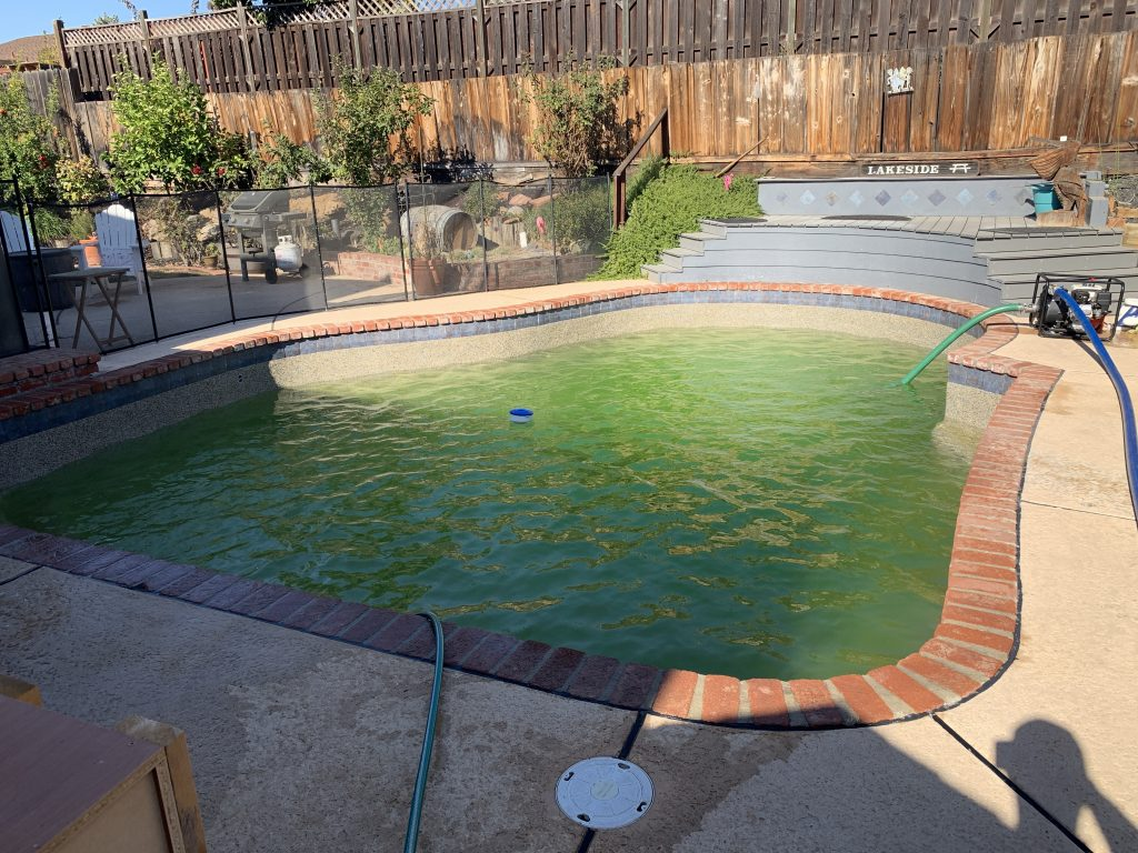 green pool needing cleaned and chemicals added